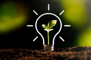 Light bulb with growing plant. Ecological friendly and sustainable environment